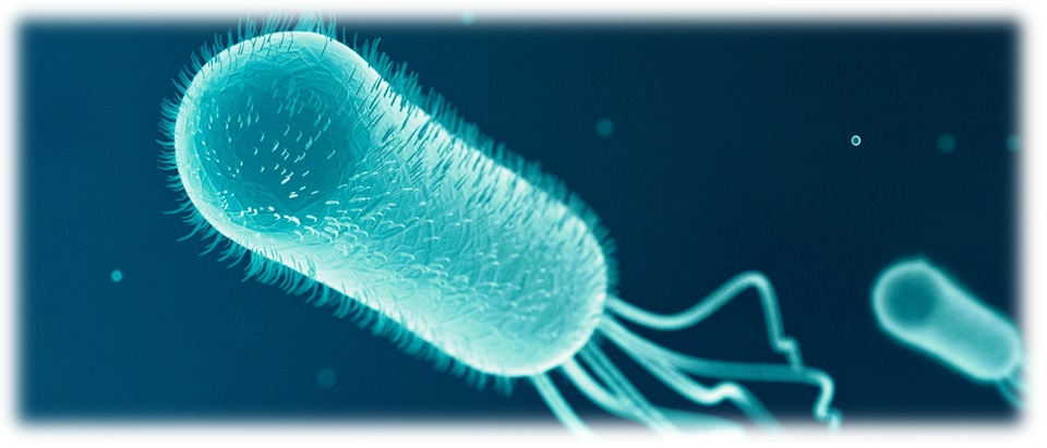 E coli  Symptoms and causes  Mayo Clinic